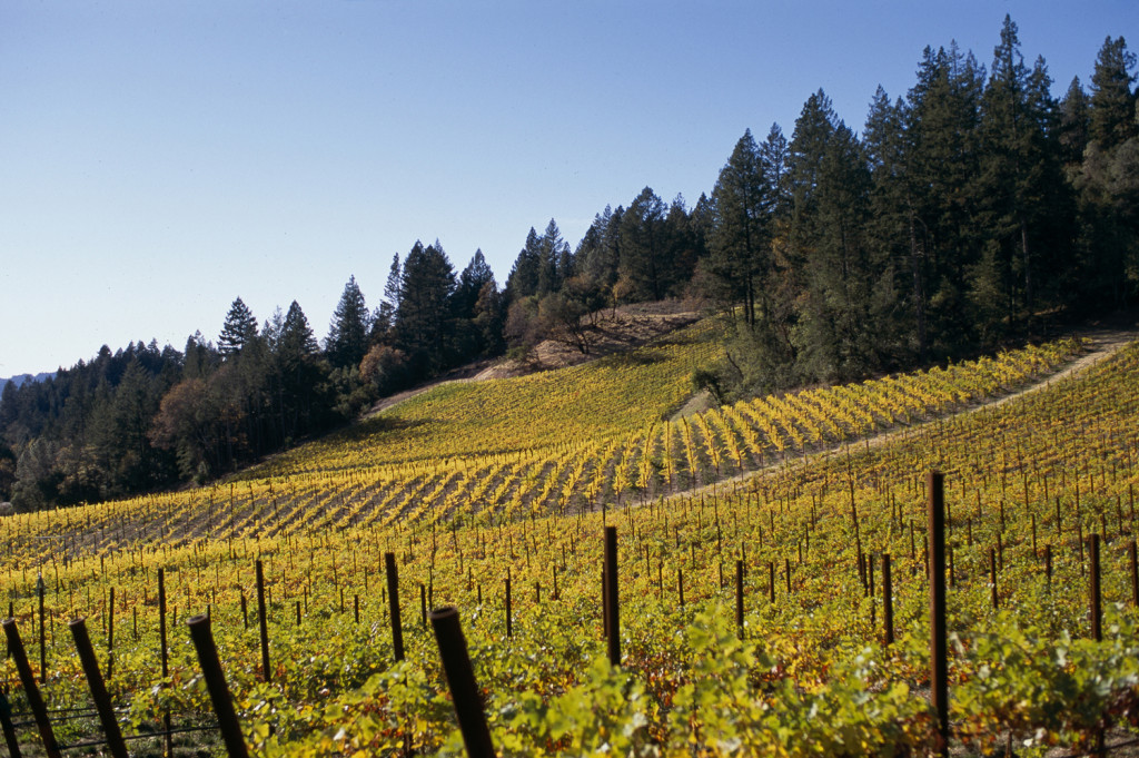 3400152-howell-mtn-vineyard-11-05